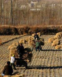Аграрное общество