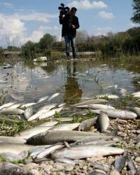 Экологические нарушения