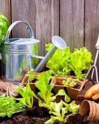 Изменения для садоводов и дачников в 2021 году