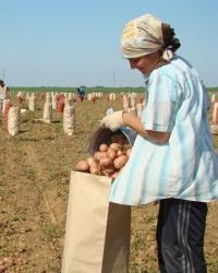 Крестьянские хозяйства и иное сельскохозяйственное землепользование