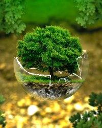 Окружающая среда 2020
