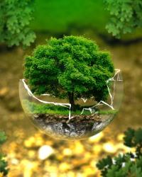 Окружающая среда в 2020-2021 году