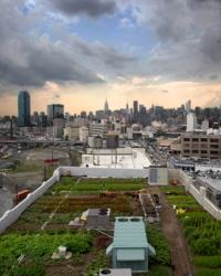 Отраслевая структура управления в городском хозяйстве