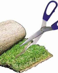Правомочия собственника земельной доли по распоряжению ею