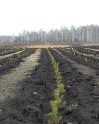 Проведение восстановления земель