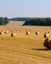 Сельскохозяйственная революция