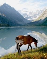 Турпродукт в эко-туризме: специфика, виды, типология