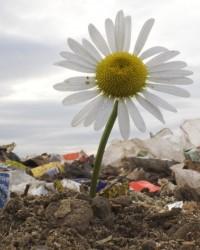 Управление экологическими рисками