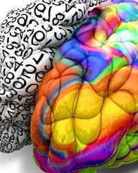 Воздействие на оба полушария мозга при создании торговой марки